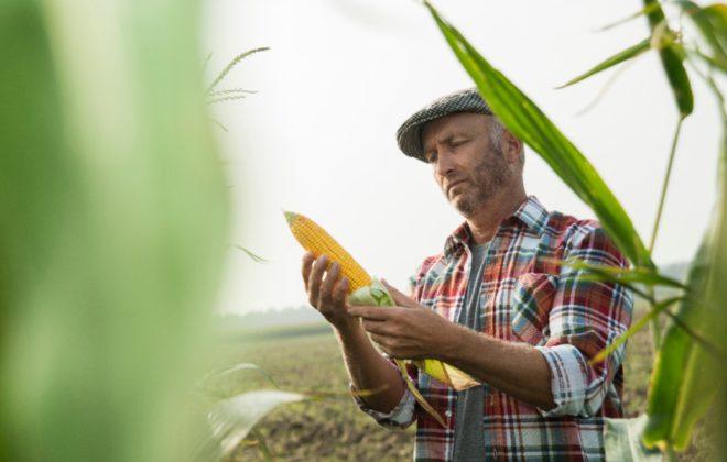 siemens crea ropa con maíz