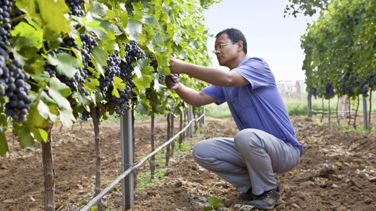 Digitalización producción vino