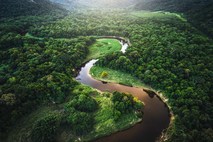 bosques tropicales mata atlantica